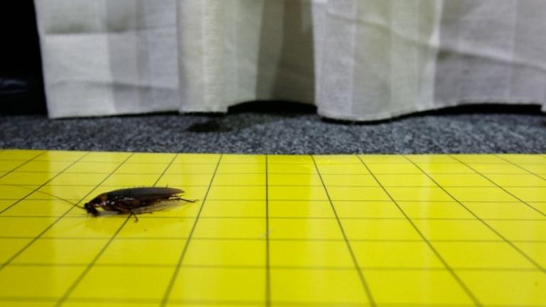 В Китае с фермы сбежали лечебные тараканы