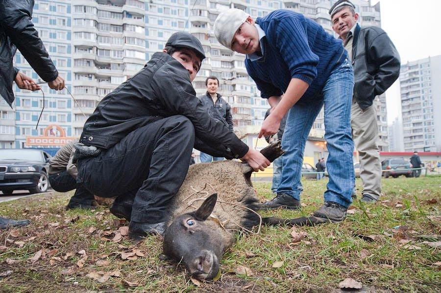 Онищенко выступает против мусульманского традиционного хаджа