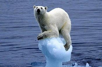 11 самых интересных фактах о глобальном потеплении