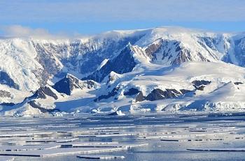 Интересные факты об Антарктиде: растительность и животный мир