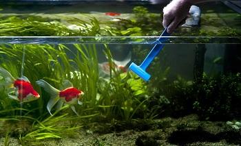 Уход и обслуживание аквариума: выбор оборудования и советы