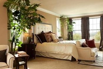 Какие выбрать комнатные растения для спальни