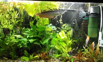 Подбираем в аквариум эффективный светильник: виды и характеристики