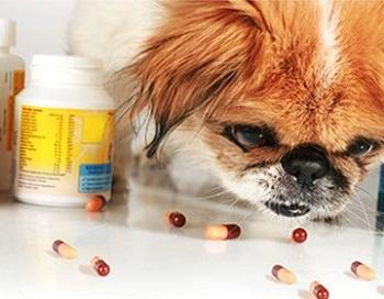 Избавление от глистов у собак: способы, правила и этапы