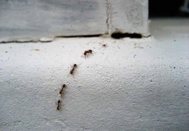 Борьба с муравьями в доме: способы и этапы процесса