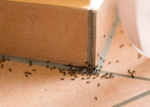 Правила и способы борьбы с муравьями в доме