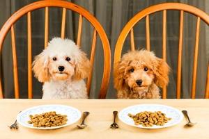 Выбираем правильные корма для домашних собак и советы