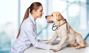 Достоинства витамин для собак и рекомендации по выбору